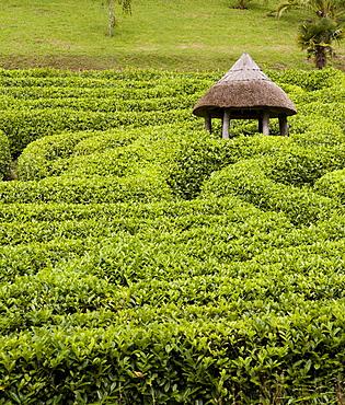 Labyrinth in Glendurgan Garden, Cornwall, England, Great Britain