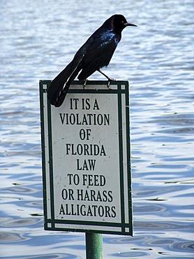 Sign: Prohibition of feeding or harassing alligators, Celebration, Florida, USA