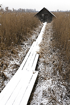 Snow-covered boardwalk surrounded by reeds leading to hut, Federsee, Bad Buchau, Upper Swabia, Baden-Wuerttemberg, Germany, Europe