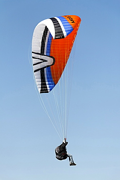 Landing approach of a paraglider, Lower Rhine, NRW, Germany
