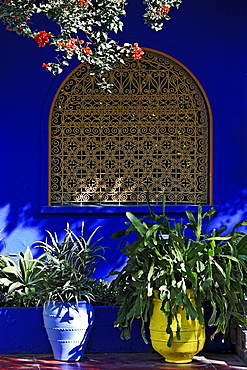 Colourful flowerpots in front of shining luminous blue wall with Arabic window, Jardin Majorelle, Marrakech, Morocco, Africa