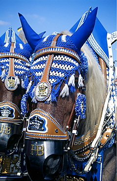 Adorned horses, Oktoberfest, Munich, Bavaria, Germany