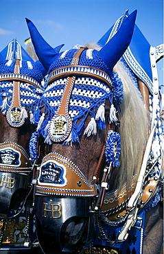 Adorned horses, Oktoberfest, Munich, Bavaria, Germany