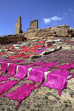 Tanned hides, drying on the hill El Kolla, Fes, Morocco
