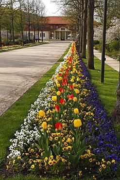 Spring flower bed in Bad Bocklet spa gardens, Rhoen, Lower Franconia, Bavaria, Germany, Europe
