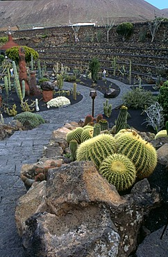 Jardin de Cactus, Lanzarote, a garden with a lot of cactuses, design from Cesar Manrique
