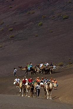 Camel ride in National Park Timanfaya Lanzarote Canaries