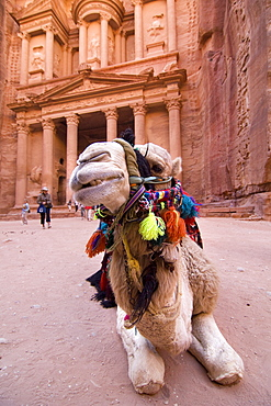 Camel lying and ruminating in front of the Khazne al Firaun, Al Khazneh treasury building, Petra, Jordan, Middle East