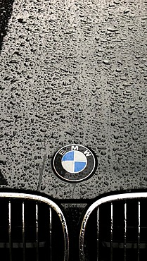 Rain drops on the paint of a car hood