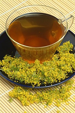 Lady's bedstraw, medicinal tea, Galium verum, Gallio