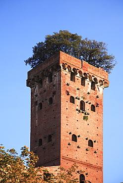 Guinigi Tower, Lucca, Tuscany, Italy
