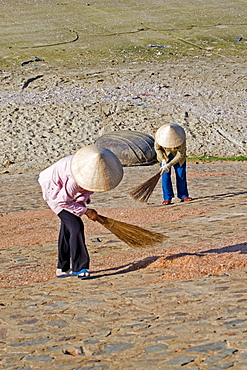 Two Vietnamese women are turning around prawns, Mui Ne, Vietnam, Asia