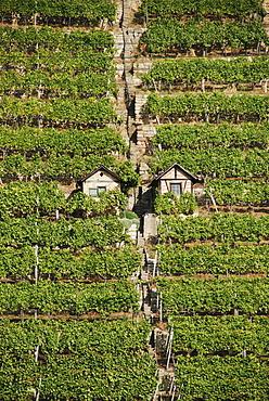 Vineyards max of Eyth lake Stuttgart Baden Wuerttemberg Germany