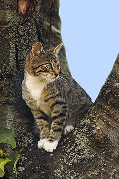 Young domestic cat sitting in a tree