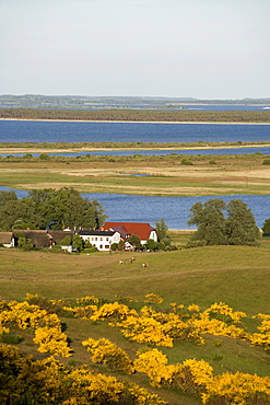 View of the village Grieben from the Dornbusch, hill, Hiddensee Island, Baltic Sea, Mecklenburg-Western Pomerania, Germany, Europe