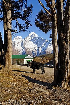 Sherpa village Khumjung with Thamserku (6608), Sagarmatha National Park, Khumbu, Nepal