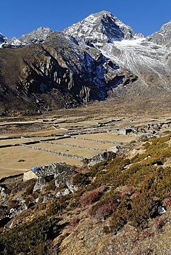 Yak pasture near Machhermo (4410), Sagarmatha National Park, Khumbu Himal, Nepal
