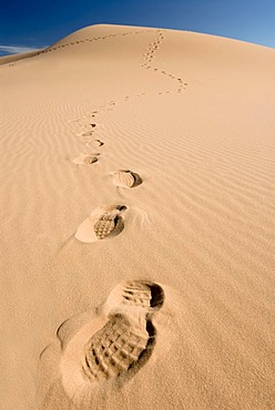 Dune with footprints, Coral Pink Sand Dunes State Park, Utah, USA