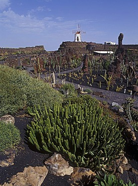 Jardin de Cactus near Guatiza ( founded by Cesar Manrique ) Lanzarote, Canary Islands, Spain, Europe