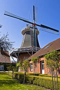 Historical windmill build in typical Dutch style with the fantail at the back, husking mill, Esens, East Frisia, Lower Saxony, Germany, Europe