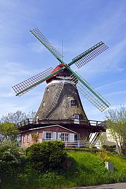 One-storeyed Galeriehollaender Windmill, historic windmill named Lindaumuehlenholz in Boren-Lindau on the Schlei River, Schleswig-Holstein, Germany, Europe