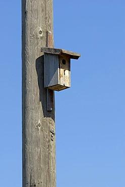 Bird nesting box on a wooden telephone pole