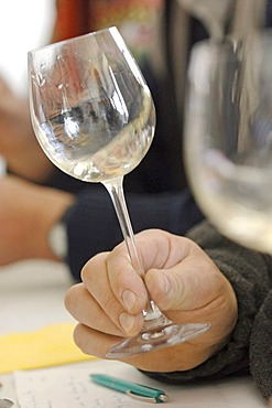 Winetasting - smelling the flavour of white wine