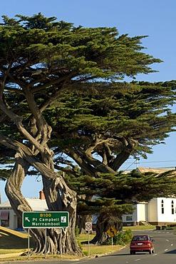 Trees at a country road, Apollo Bay, Victoria, Australia