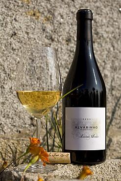 Alvarinho, a Vinho Verde of the Oenologist Anselmo Mendes, one of the most successfully Vinho Verde vintners, Vila Nova de Anha near Viana do Castelo, Minho Region, North Portugal, Europe