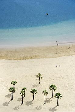 Bird's eye view, palm trees and beach, Playa de las Teresitas, San Andrés, Tenerife, Canary Islands, Spain, Europe