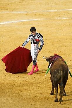 Torero and bull, bull fight, Benidorm, Spain, Europe