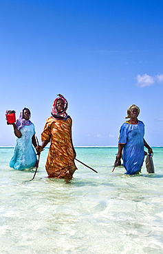 Brightly dressed women walking to the beach after fishing, Zanzibar, Tanzania, Africa