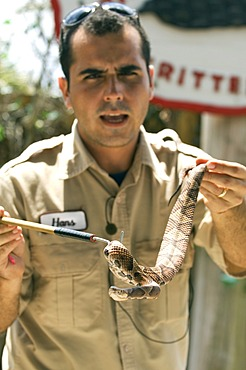 Ranger showing a rattle snake during a snake show, Billie Swamp\'s Safari Camp, Everglades, Florida, USA