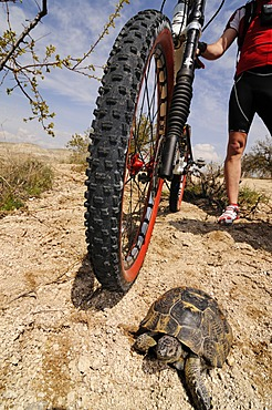 Mountain biker finding a tortoise, Goereme Valley, Cappadocia, Turkey