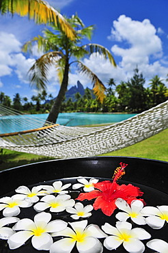 Hammock, palm tree, floral decorations, St. Regis Bora Bora Resort, Bora Bora, Leeward Islands, Society Islands, French Polynesia, Pacific Ocean