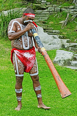 Aborigine playing an instrument during the Aboriginal dance performance at the Aboriginal Cultural Cruise in the port of Sydney, New South Wales, Australia