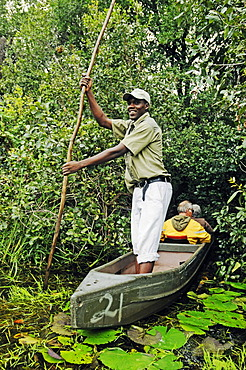 Guide and boatman with pole on a mokoro or makoro canoes, tourists in the back, Okavango Delta, Botswana, Africa