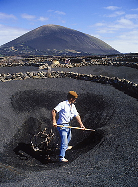 Worker in a lava field, dryland agriculture on lava, volcanic landscape at La Geria, Lanzarote, Canary Islands, Spain, Europe