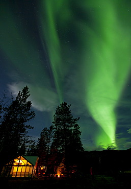 Illuminated wall tent, cabin, green northern polar lights, Aurora borealis, spruce trees, near Whitehorse, Yukon Territory, Canada