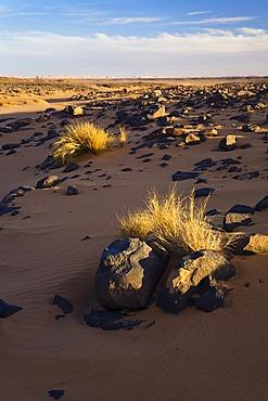 Light and shadows in the Libyan Desert, rocky desert, Libya, Sahara, North Africa, Africa