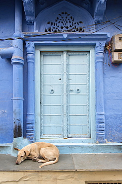 Dog in front of Ornate Door, Blue City, Jodhpur, Rajasthan, India, Asia