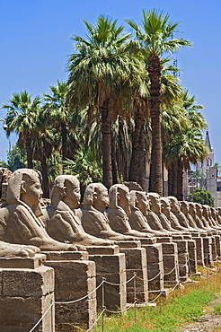 Avenue with sphinxes, Avenue of Sphinxes, Karnak Temple, Karnak, Luxor, Egypt, Africa