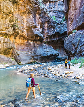 Hiker crossing river, Zion Narrows, narrow of the Virgin River, steep faces of Zion Canyon, Zion National Park, Utah, USA, North America