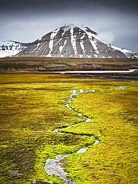 Small stream meandering through a lush field covered in moss, Spitsbergen Island, Svalbard Archipelago, Svalbard and Jan Mayen, Norway, Europe