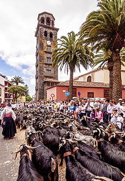 Romeria de San Benito de Abad, traditional street party, La Concepcion Church, San Cristobal de La Laguna, Tenerife Island, Canary Islands, Spain, Europe
