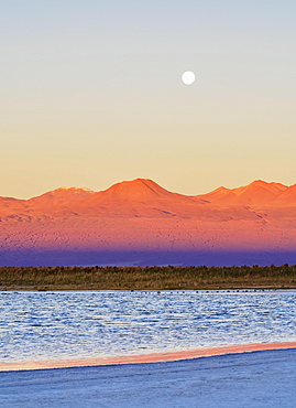 Laguna Baltinache at sunset, Salar de Atacama, Antofagasta Region, Chile, South America