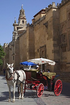 Horse and carriage outside La Mezquita, former mosque, Cordoba Catedral, Cordoba Cathedral, UNESCO World Heritage Site, Cordoba, Andalusia, Spain, Europe