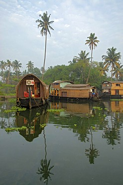 Houseboats and palm trees reflected in the backwaters of Alleppey, Kerala, India, Asia