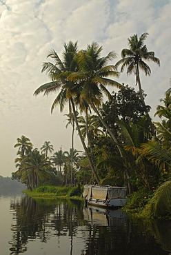Boat and palm trees reflected in the backwaters of Alleppey, Kerala, India, Asia