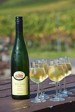 Riesling Kabinett wine bottle with filled wine glasses, Rheingau, Hesse, Germany, Europe